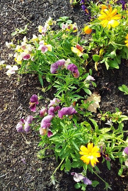 roundabout plants 2