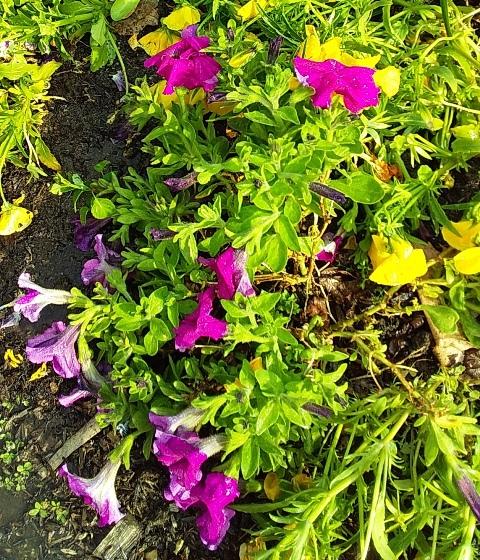 roundabout plants 4